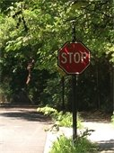 Trees shading stop sign