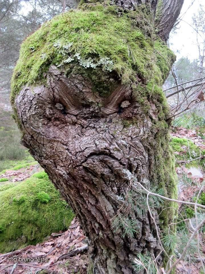tree trunk monster